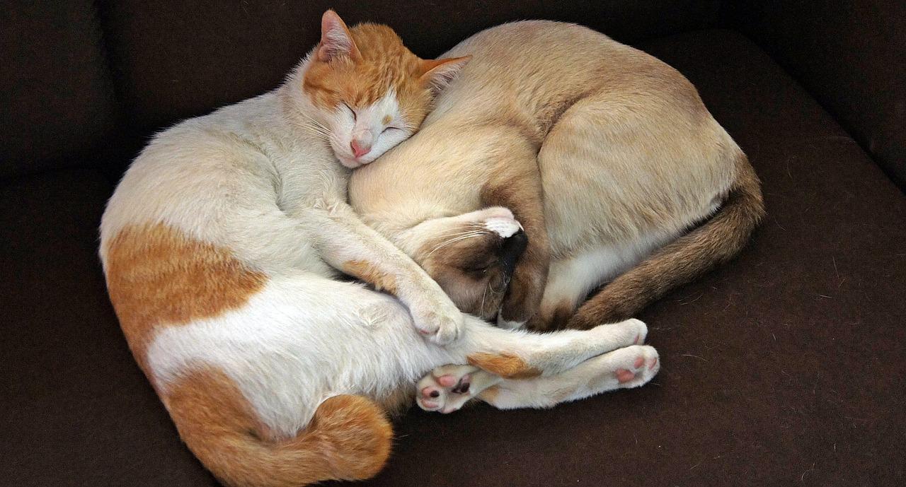 Proč kočky tak často spí?